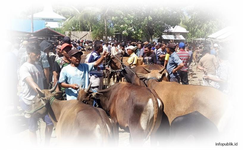 Loans for Cow Breeders in Indonesia