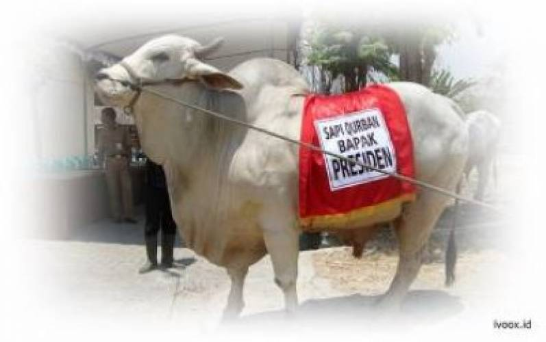 Qurbani For Hajj Business for Muslim Market: 5 Guides for Expanding Your Cattle Farming